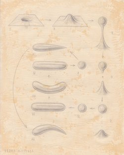 order nr. 18040 / pencil and theine on paper / 250x200 mm